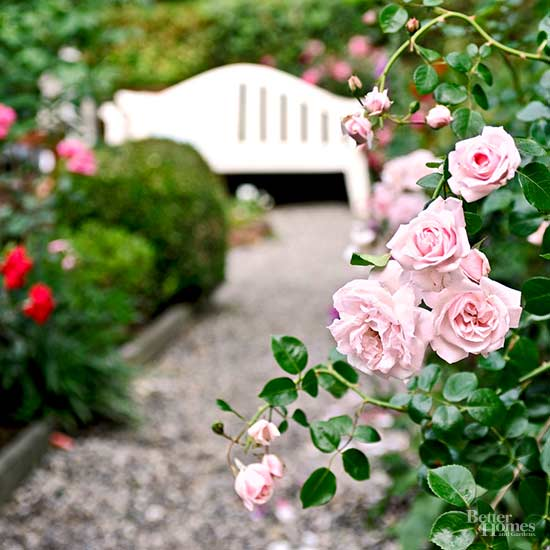 How to Grow Roses That Will Make You the Envy of Your Block