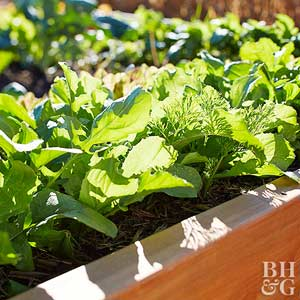 How to Grow Spinach Even Your Kids Will Eat