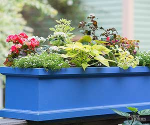 10 Container Gardening Mistakes Even Good Gardeners Make