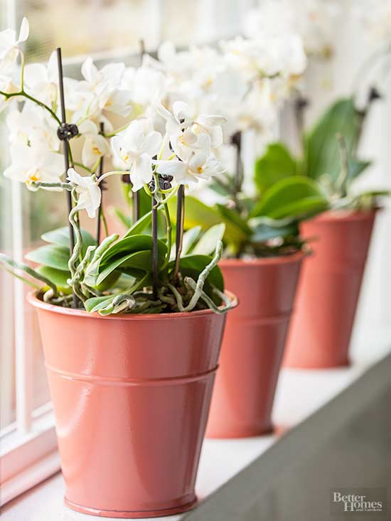 How to Water Orchids to Inspire Beautiful Blooms