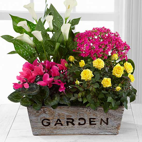 fresh floral picks from better homes  gardens flowers by ftd, Natural flower