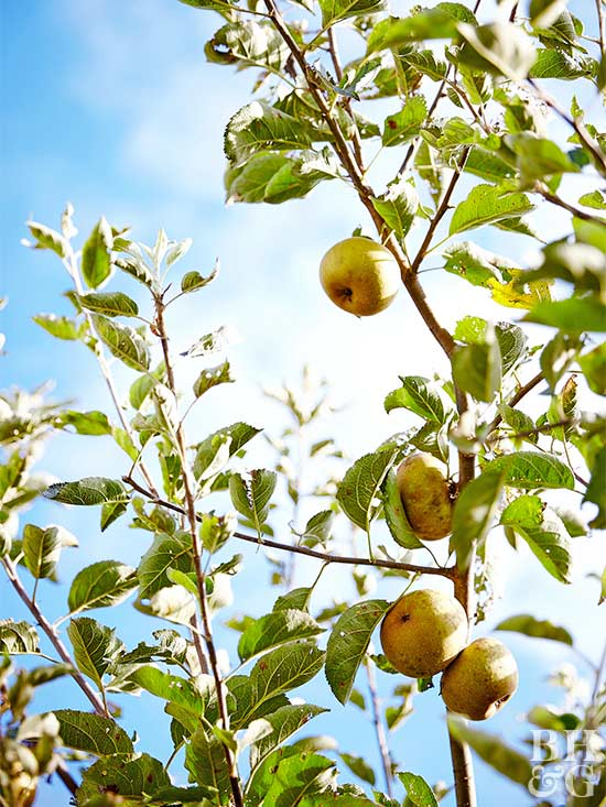 set the pot in a sunny site out of the wind wind can be hard on a young tree and will dry out containers quickly when the soil dries out to about