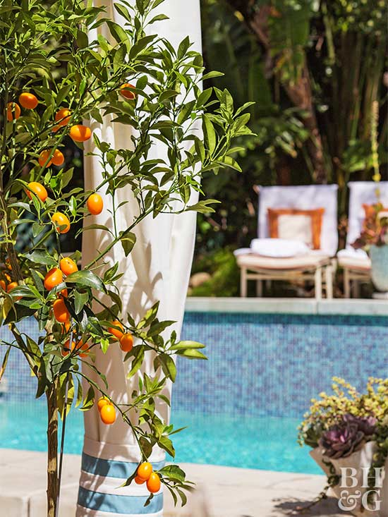 When You Pot Up A Fruit Tree, You Can Savor Springtime Blossoms And Feast  On Fall Fruit Anywhereu2014on A Deck, On A Patio, Or Even On A Sliver Of  Balcony.