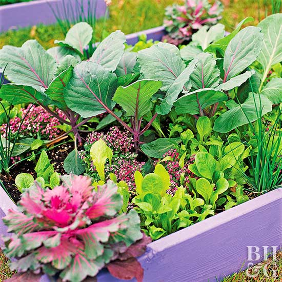 locate this small potager or ornamental vegetable garden near your kitchen door for instant access to fresh greens and chives all season long