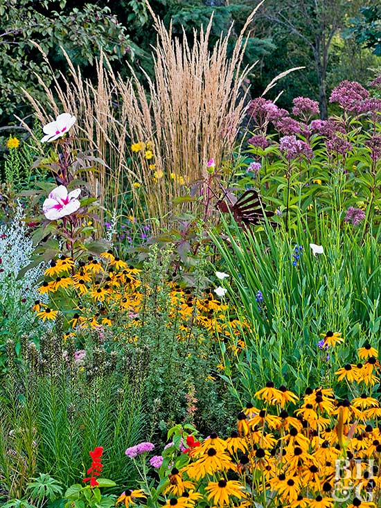 Marvelous Reliable Drought Tolerant Plants