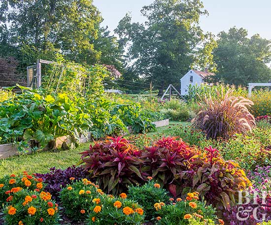 Tips for growing an organic vegetable garden for Vegetable and flower garden ideas