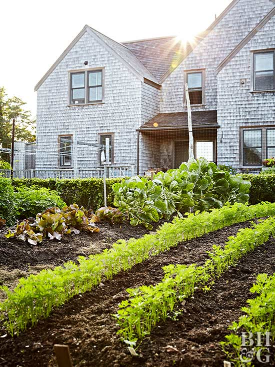 Planning your first vegetable garden for Design your vegetable garden