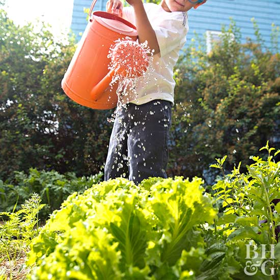 what 39 s the best time of day to water vegetables
