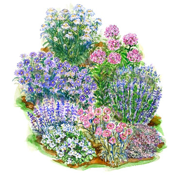 Cool-Color Garden Plans
