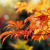 Dramatic Autumn Leaves