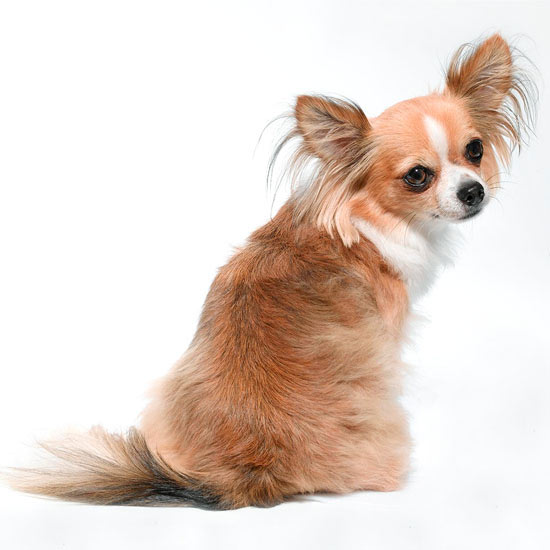 52 Fun Names for Small Dogs