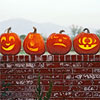 Five Funny Pumpkin Faces