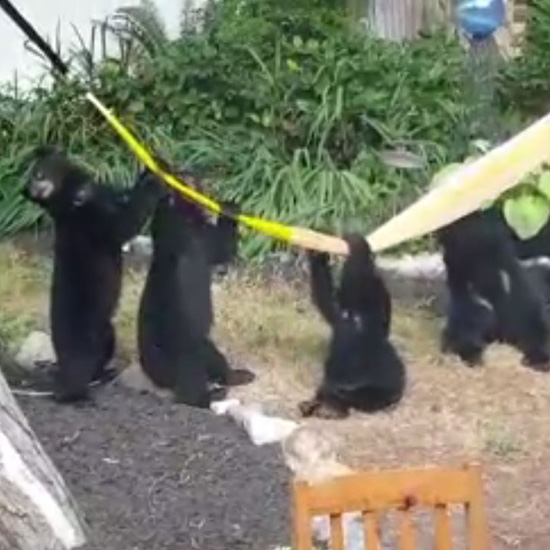 A Family of Bears Walked Into His Garden and You Won't Believe What They Did!