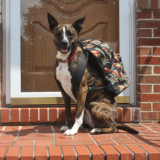 This Woman Took the Cutest Back-to-School Photo of Her Dog