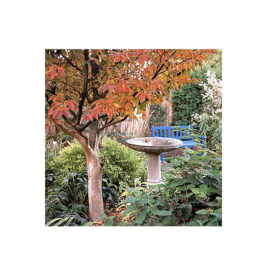 Assessing the Value of Trees and Shrubs