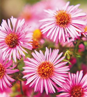 Top Fall-Blooming Flowers for Your Garden