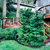 A Curvaceous, One-of-a-Kind Deck