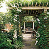 Perfect Pergola