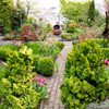 Connect Your Garden with a Narrow Brick Pathway