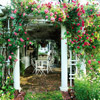 Rose-Covered Pergola