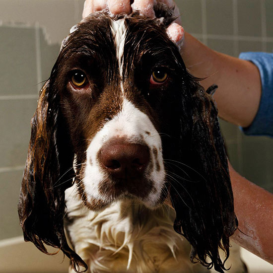 10 Steps to a Clean Dog