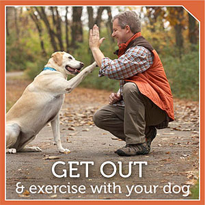 Dog-Walking Workout
