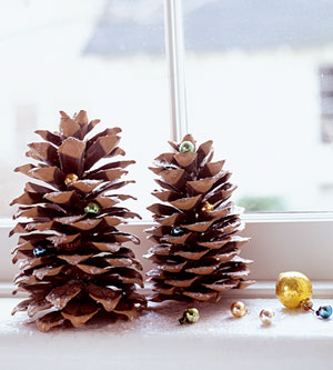 Pine cones dusted with snow