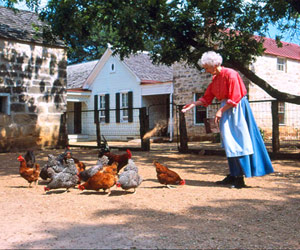 woman throwing feed at chickens