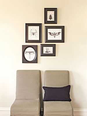 Framed insect images