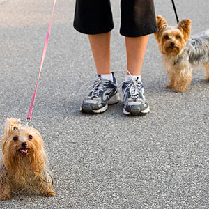 woman walking her dogs