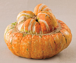 Turban Squash