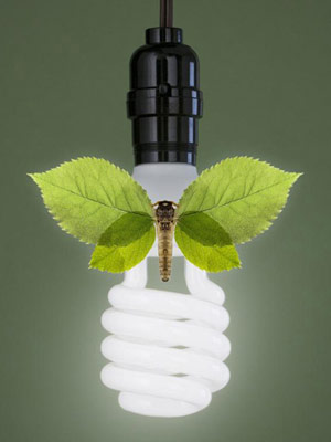 lightbulb with insect