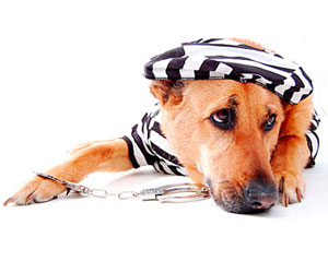 dog in prison costume