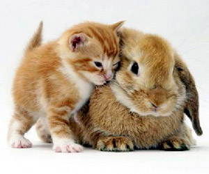 kitten with bunny