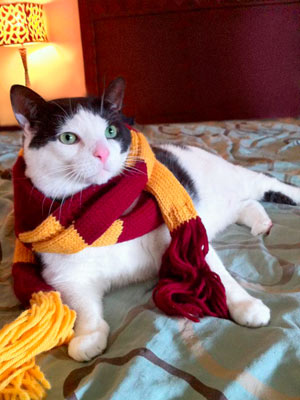 Black and white cat wearing Gryffindor scarf