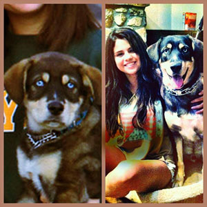 Selena Gomez with dog