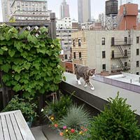 Julie Bain cat on rooftop