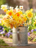 A special daffodil collection for readers