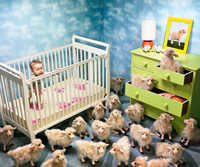 Baby in crib surrounded by sheep
