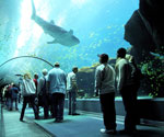 walking under aquarium