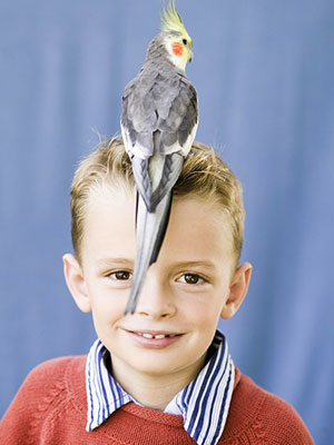 boy with his pet cockatiel