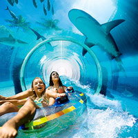 Shark swim at Atlantis