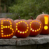 Halloween and Fall Inspired Decorations for your Home