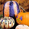 Pretty, No-Carve Pumpkins