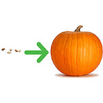 baby grows from sesame seed to pumpkin in size