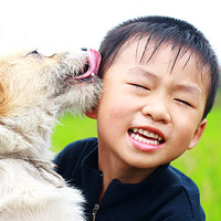 Dog kissing boy