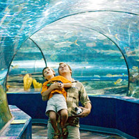 child and dad visiting the aquarium