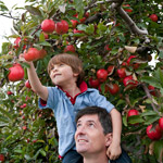 boy apple picking with his father