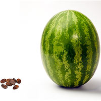 Your baby grows from the size of a tiny seed to a watermelon in just 40 weeks.