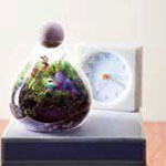 terrarium nature